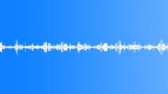 Bird singing. Forest paradise. - sound effect