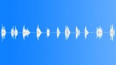 Thrush. Trills. Sound Effect