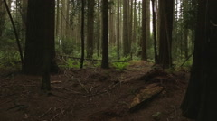 Pacific Northwest Forest Undergrowth - stock footage