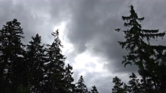 4k Dark clouds time-lapse over spruce trees in Harz mountains Stock Footage