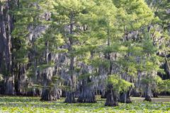 Stock Photo of Green trees