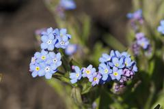 Beautiful flower of brightly blue color Stock Photos