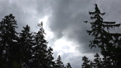 Dark clouds time-lapse over spruce trees in Harz mountains Stock Footage