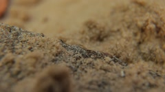 Desert Ants Quickly Run On The Sand Stock Footage