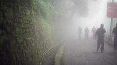 People walking in a fogy misty creepy forest, medium shot, shallow DOF - stock footage