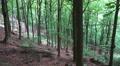 Mountain forest slope Ilsestein mountain range Harz HD Footage