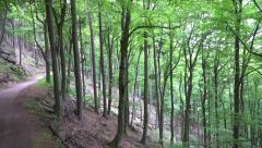 4k Mountain forest slope pan Ilsestein Harz mountain range Stock Footage