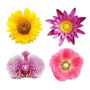 Colorful floral collage lotus; orchid; sunflower; hollyhock Stock Photos