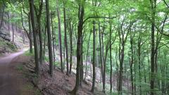Mountain forest slope pan Ilsestein Harz mountain range Stock Footage