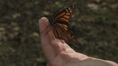 Monarch Butterfly on Hand Stock Footage