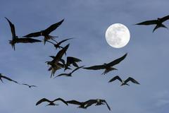 Birds Flying by Spooky Moonlight Kuvituskuvat