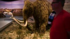 Wooly mammoth reconstitution Stock Footage