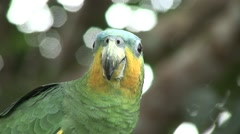 Close-up of a green Brazilian parrot Stock Footage