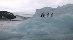 Adelie Penguins sitting on an Antarctic Iceberg Stock Footage