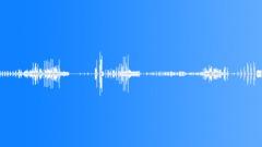Nightingale. Cuckoo. Moorhen. Sound Effect