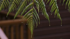 Heavy Rain and drops falling - stock footage