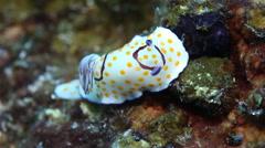 Nudibranch unique marine life macro Stock Footage