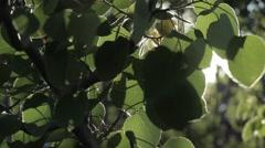 Sun peaking through tree leaves Stock Footage