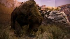 Cave bear reconstitution Stock Footage