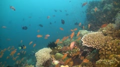 Verde Island, Coral reef in Philippines Stock Footage