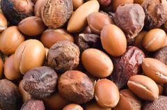 Group of argan fruits. Close up - stock photo