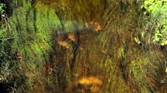 Water flowing through a tiny river. In the bottom, water plants. Stock Footage