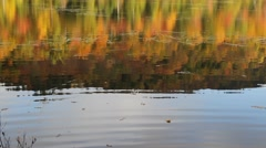 Adirondack pond during peak fall foliage - stock footage