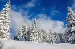 Forest covered with snow in winter, Poland Stock Photos