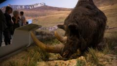 Wooly rhino reconstitution in a museum Stock Footage