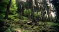 4k Harz mountain range forest hill panning low angle 4k or 4k+ Resolution