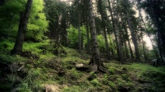 4k Harz mountain range forest hill panning low angle Stock Footage