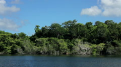 Trees and vegetation in the cenote's shore. Stock Footage