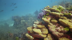 Coral reef with fish colourful Stock Footage