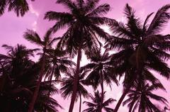 Two palm trees silhouette on sunset beach - stock photo