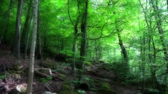4k Dreamy hillside nature in mountain range forest Harz Stock Footage