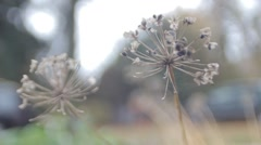 Dead Flower Leaves Nice Skeleton Stock Footage