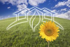 Sunflower with Green House Ghosted Over Arched Fresh Grass and Blue Sky. - stock photo