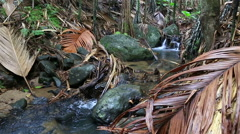 Clear stream in Vallee de Mai Nature Reserve Stock Footage