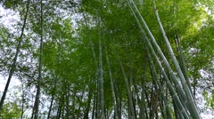 Thailand, Bamboo Stock Footage