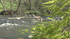 Juniper tree branch and river water flowing. Focus change. 4K Stock Footage