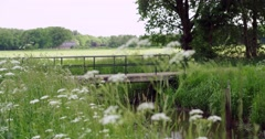 Natural vegetation along small river Netherlands 4K Stock Footage