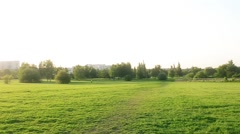 Sunshine in beautiful park Stock Footage