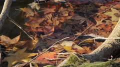 Leaves in Water Stock Footage