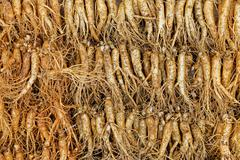 crowd of real ginseng - stock photo