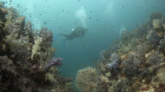Scuba diver coral reef low visability Stock Footage