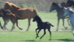 free herd of horses - stock footage