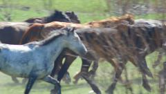 Galloping herd of flying Stock Footage
