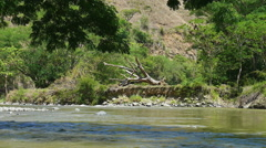fallen tree on river bed - stock footage