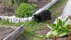 House black cat playing with small mouse Stock Footage