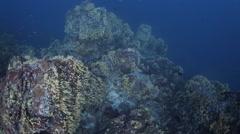 Deep coral reef unique underwater Stock Footage